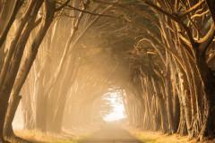 Route bordée d'arbres par Stephen Leonardi sur Unsplash.com