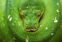 python vert enroulé par David Clode sur Unsplash.com