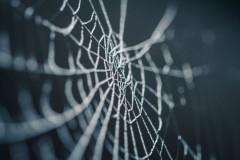 toile d'araignée par Nicolas Picard sur Unsplash.com