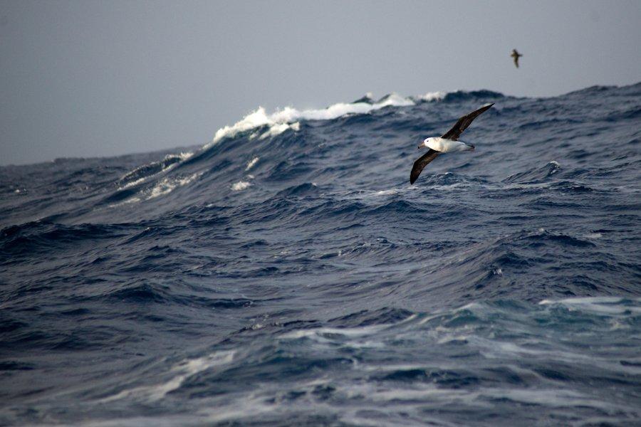Albatros par Torsten Dederichs sur Unsplash.com
